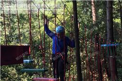 树上探险-天梯桥