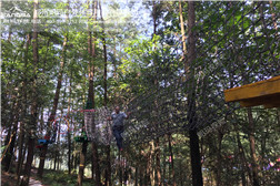 树上探险-V型网桥