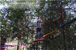 树上探险场地要求