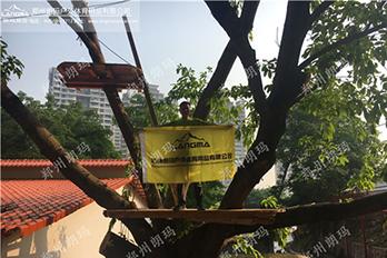 深圳市龙华区树上探险项